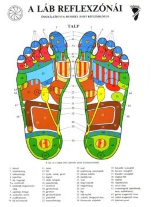 Bánszky Judit: A láb reflexzónái - Két oldalas A4
